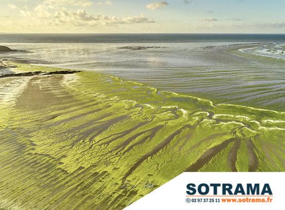 Algues vertes plage lutte Bretagne Morbihan écologie